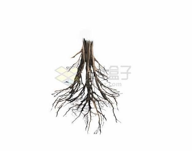 逼真的树根png免抠图片素材