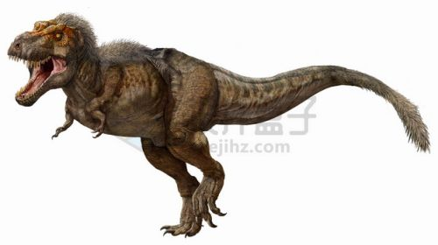 长毛的南方巨兽龙大型食肉恐龙png图片免抠素材