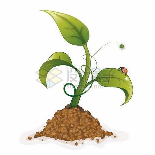 泥土中冒出来的嫩芽植物发芽png图片免抠矢量素材