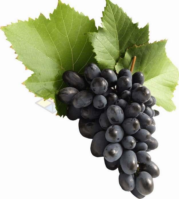 一串黑提葡萄png图片素材