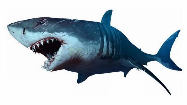 伤痕累累的鲨鱼大白鲨png图片素材