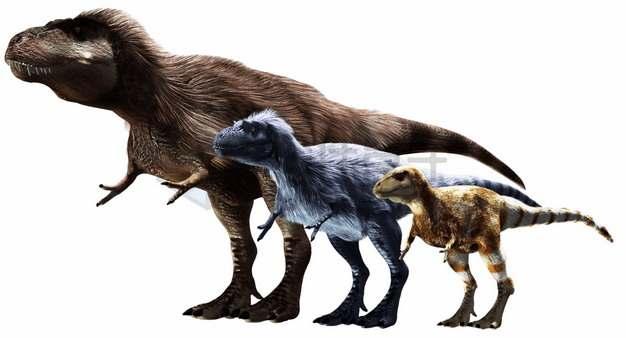 暴龙科的三种霸王龙等长毛恐龙大小对比png图片免抠素材