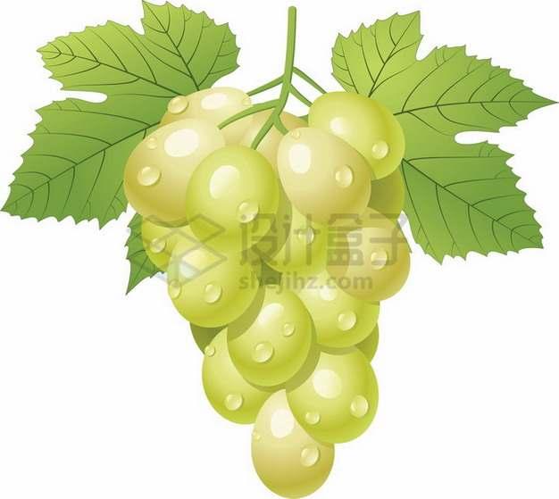 一串带叶子的珍珠葡萄青葡萄png图片素材