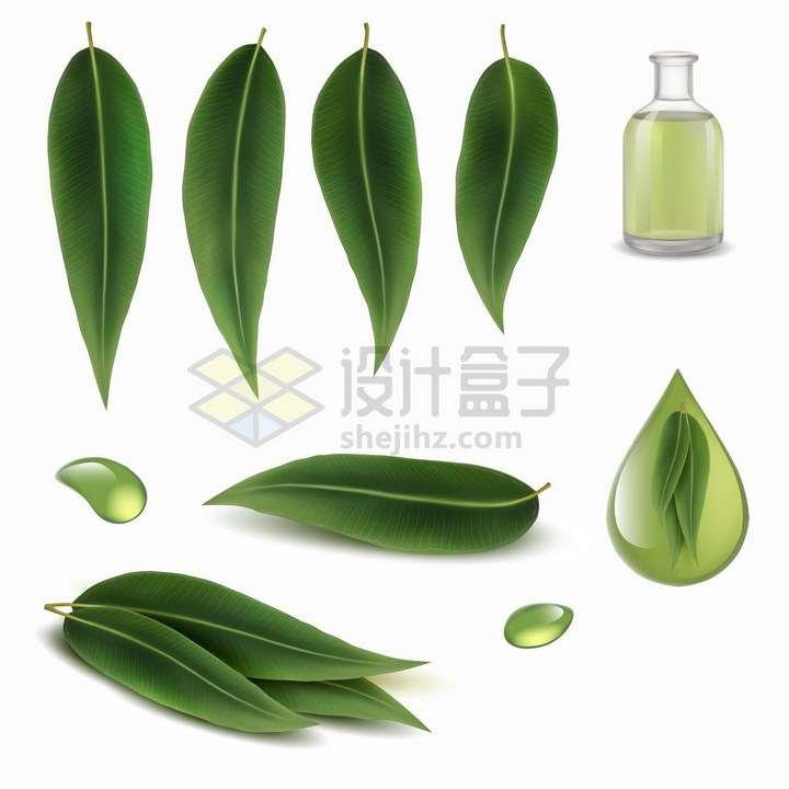绿色的桉树叶和桉树油液滴png图片免抠矢量素材