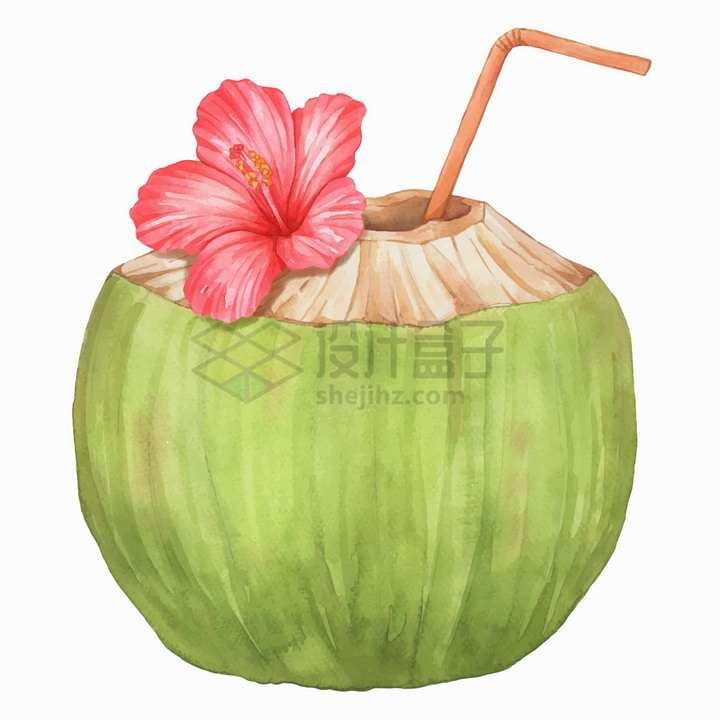 打开的美味水果椰子和芙蓉花水彩插画png图片素材