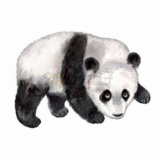 水彩画风格可爱的熊猫宝宝png图片免抠矢量素材
