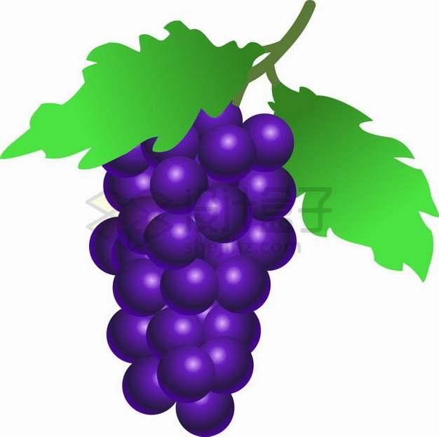 手绘风格带叶子紫葡萄png图片素材
