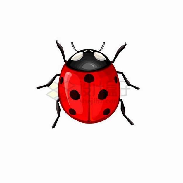 卡通七星瓢虫小昆虫png图片素材