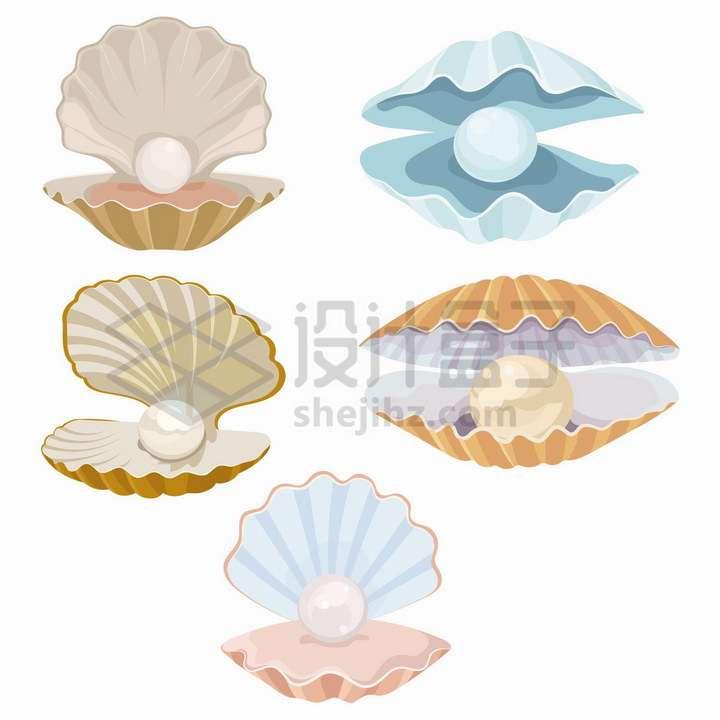 5款张开的贝壳里面露出的珍珠png图片免抠矢量素材