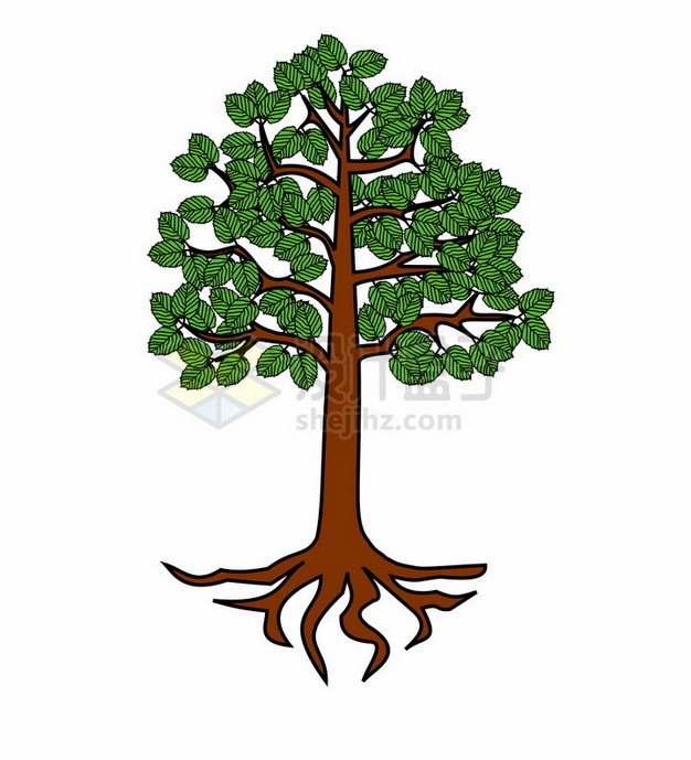 树根和大树插画png免抠图片素材