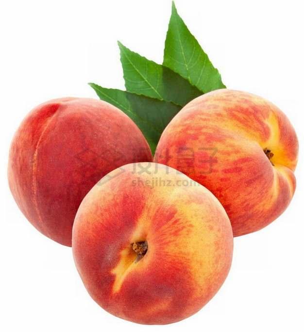 3颗带叶子的新鲜桃子穆阳水蜜桃png图片素材