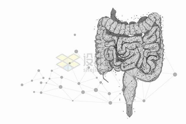 圆点和线条组成的大肠人体消化系统组织器官png图片素材