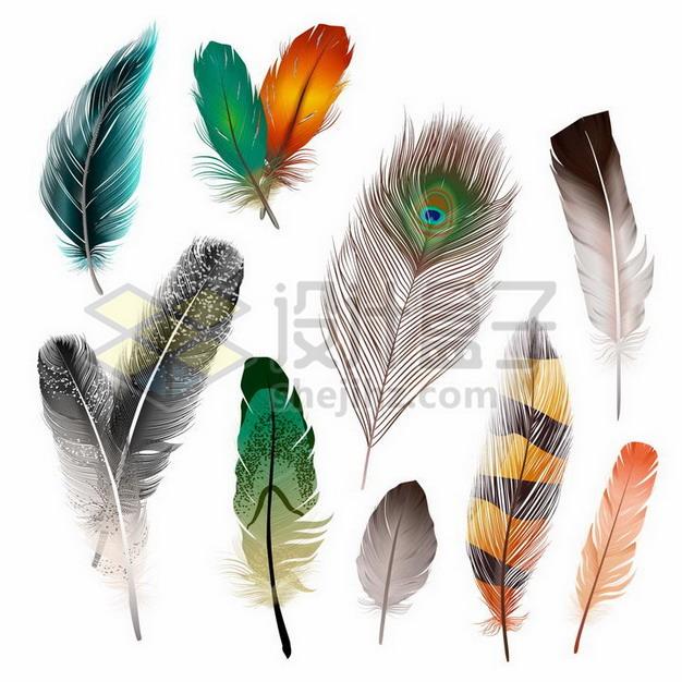 各种绚丽的鸟类羽毛孔雀羽毛png图片素材 漂浮元素-第1张