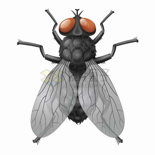 一只高清苍蝇小昆虫png图片免抠矢量素材