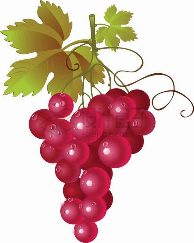 带水珠和叶子的红色葡萄红高葡萄png图片素材