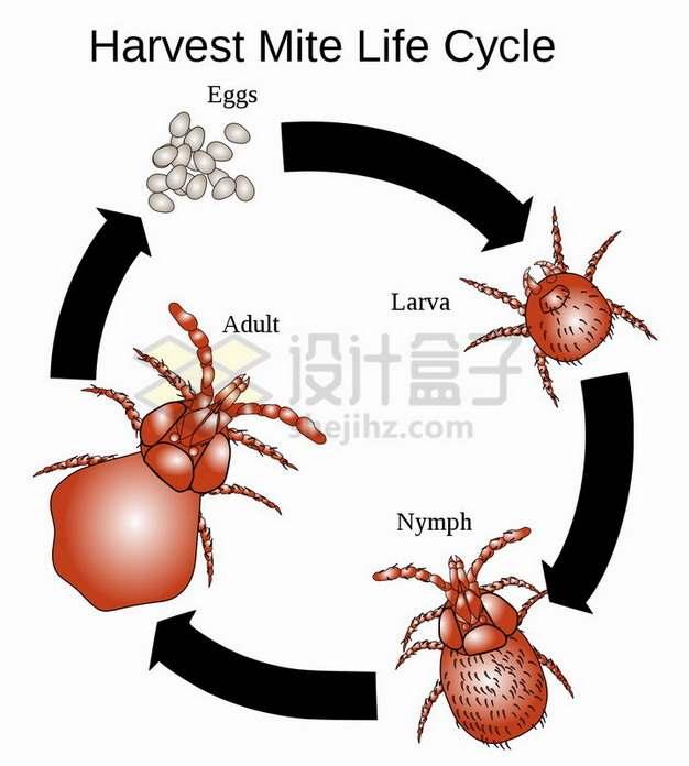 从虫卵开始螨虫的一生png图片素材