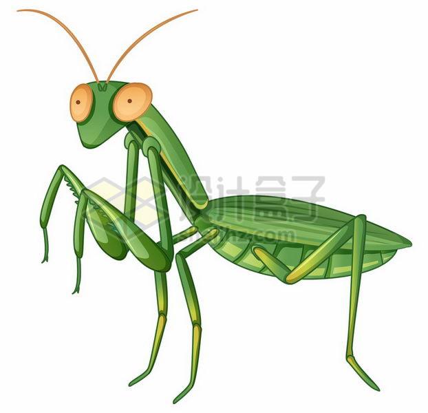 一只绿色的螳螂小昆虫png图片免抠矢量素材 生物自然-第1张
