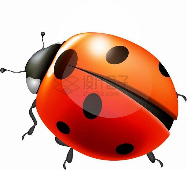 高光风格逼真的七星瓢虫小昆虫png图片素材