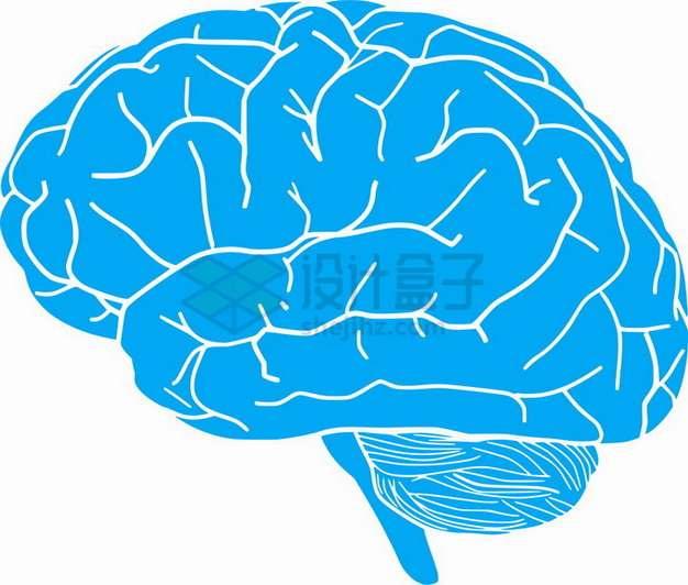 手绘蓝色人体大脑png图片素材