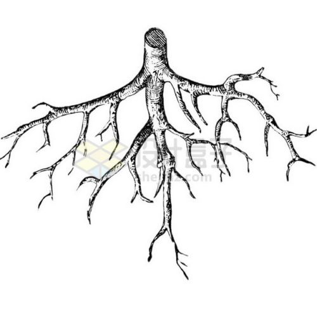 黑白色插画大树根png免抠图片素材