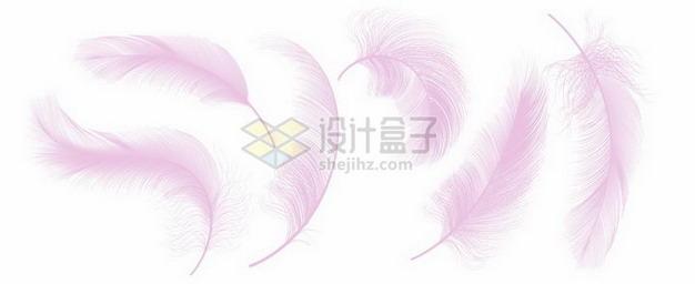 6款逼真的轻飘飘粉红色羽毛鸟毛png图片素材 漂浮元素-第1张