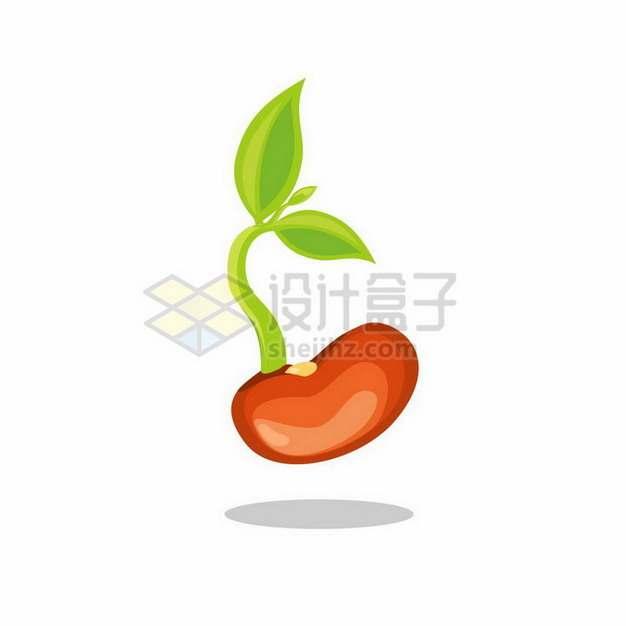 一颗正在发芽的豆子种子png图片免抠矢量素材
