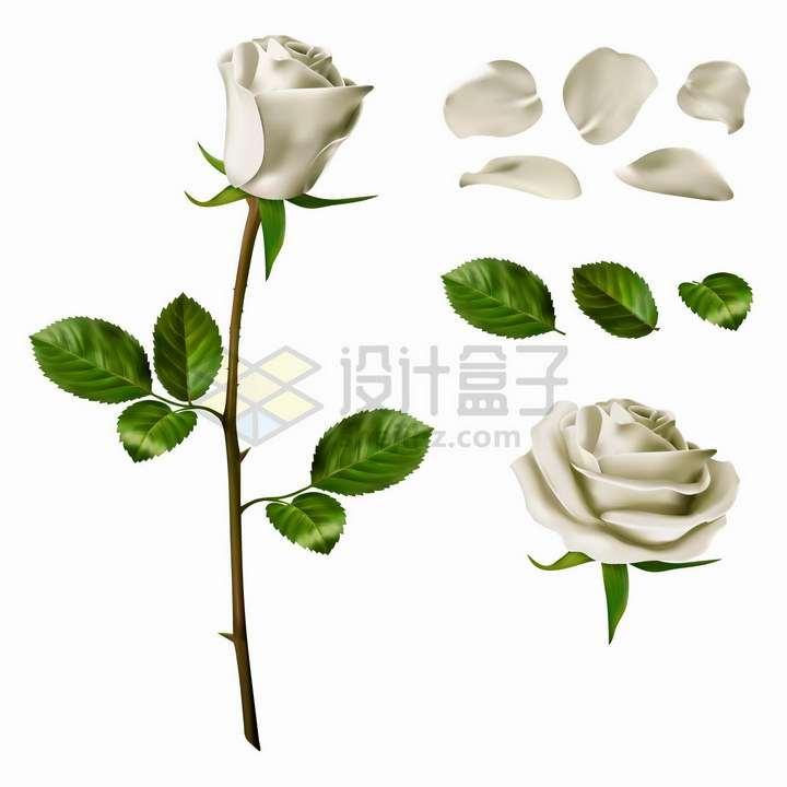 白玫瑰的花朵枝条花瓣和叶子png图片免抠矢量素材