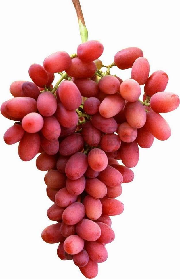 一串红提葡萄png图片素材