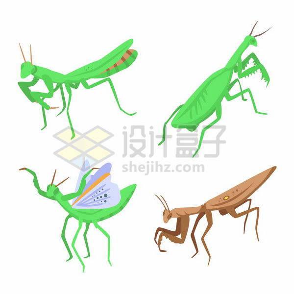 4种不同形态的螳螂png图片免抠矢量素材