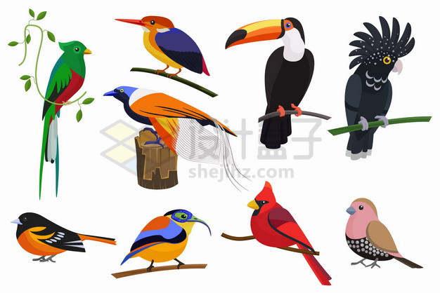 鹦鹉翠鸟巨嘴鸟麻雀等小动物鸟类插画png图片素材