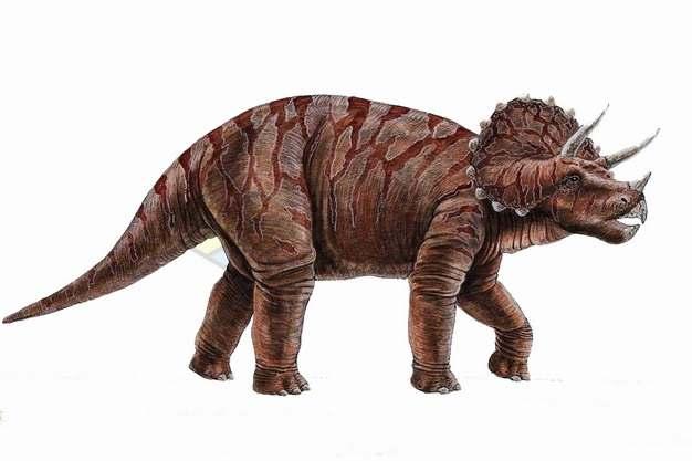 三角龙草食恐龙复原图png图片素材