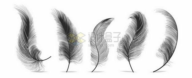 5款逼真的轻飘飘黑色羽毛鸟毛png图片素材 漂浮元素-第1张