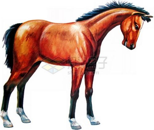 油画风格低头的骏马png免抠图片素材