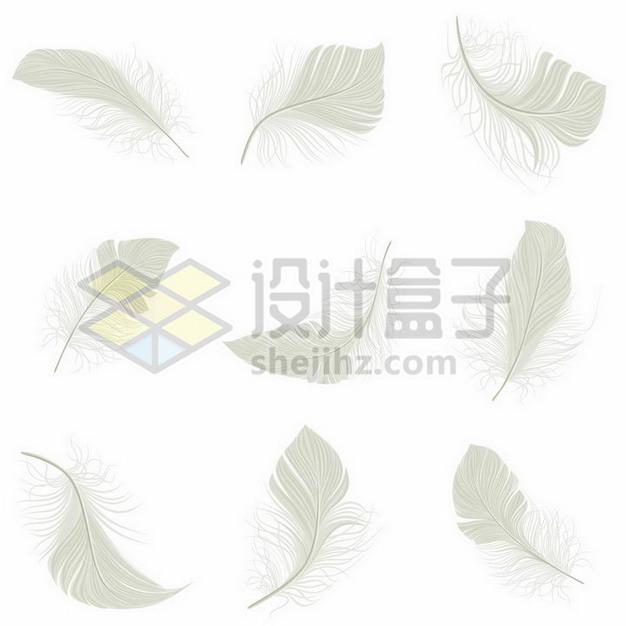 9款逼真的淡绿色羽毛绒毛鸟毛png图片素材 漂浮元素-第1张