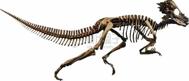 奔跑的迅猛龙肉食恐龙骨架png图片素材