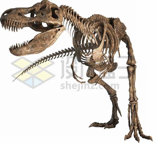 逼真的霸王龙恐龙骨架化石png图片免抠素材
