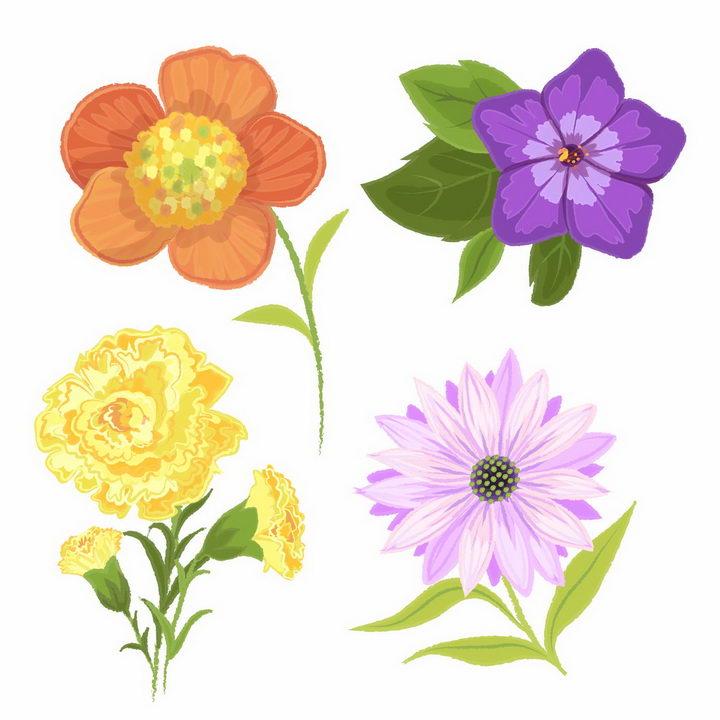 水彩画风格盛开的午时花喇叭花菊花等鲜花花朵花卉png图片免抠矢量素材 生物自然-第1张