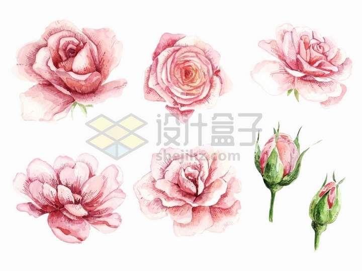 各种粉红色的玫瑰花水彩画花骨朵花苞png图片免抠矢量素材
