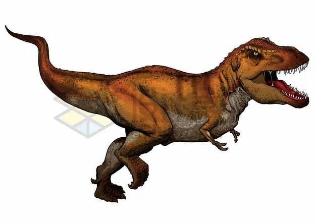 彩色插图霸王龙特暴龙大型食肉恐龙png图片免抠素材