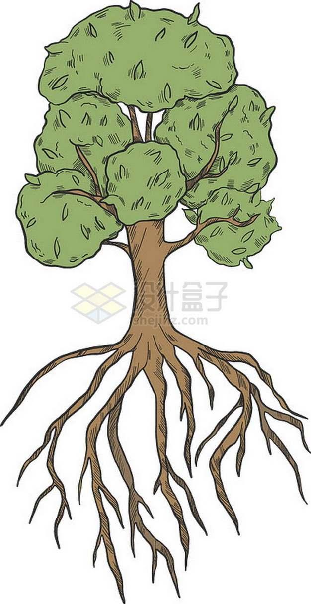 彩绘大树带树根和树冠png免抠图片素材