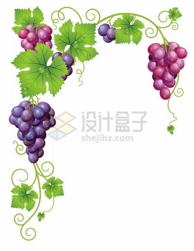 枝头上的紫色葡萄和叶子装饰png图片素材