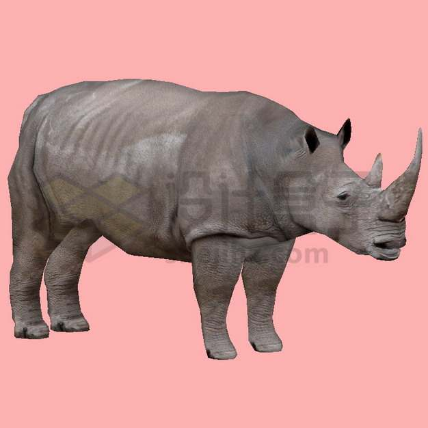 非洲大犀牛png图片素材