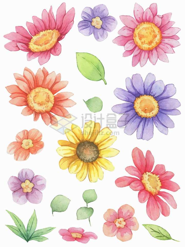 向日葵荷兰菊花朵鲜花水彩插画png图片素材