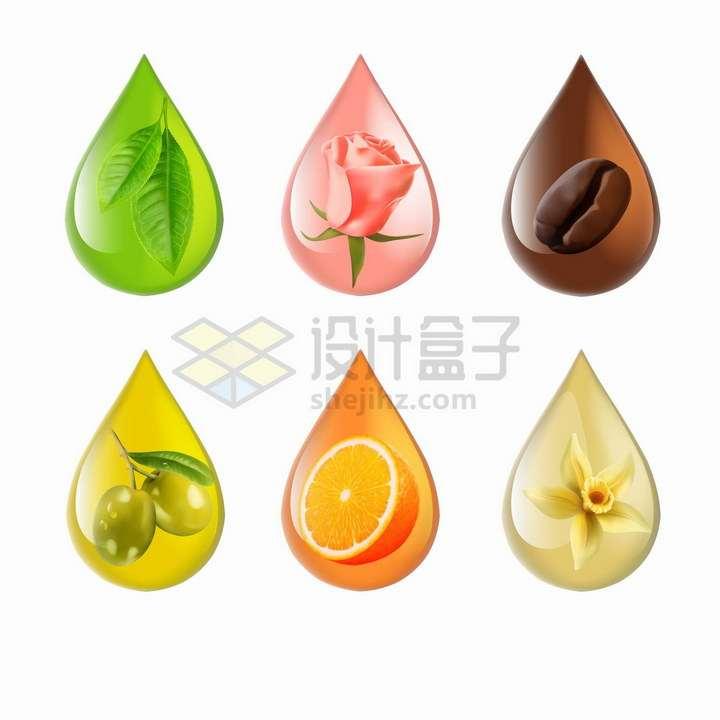 彩色透明油滴水滴中的薄荷叶玫瑰花咖啡豆橄榄橘子和茶花等png图片免抠矢量素材