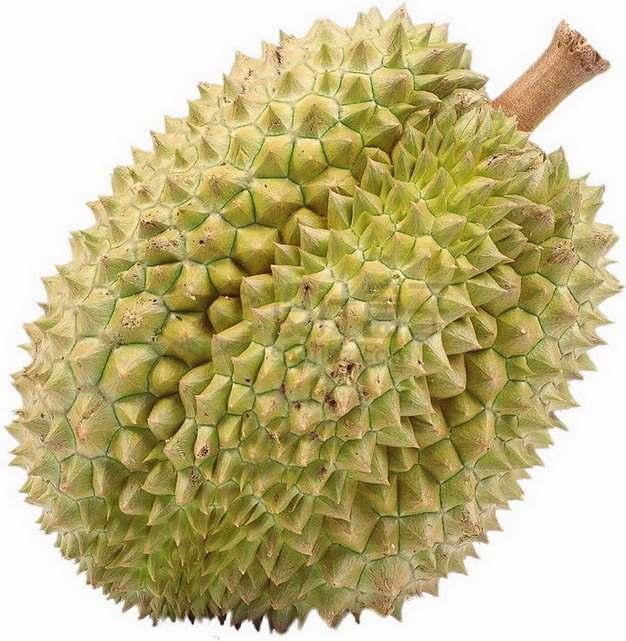 一颗完整的泰国榴莲水果之王png图片素材