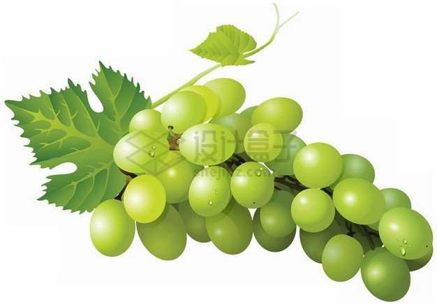 逼真的青提青葡萄png图片素材