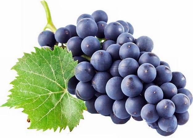 带叶子的一串紫色葡萄赤霞珠葡萄4874612png图片素材