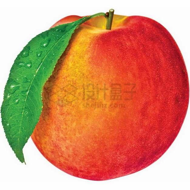 带叶子的红黄相间的桃子无锡水蜜桃png图片素材