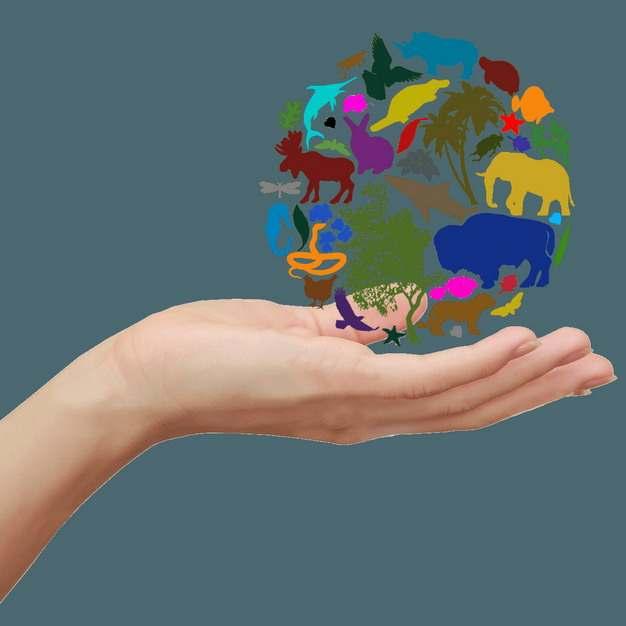 一只手托起的生物剪影圆球国际生物多样性日png图片素材