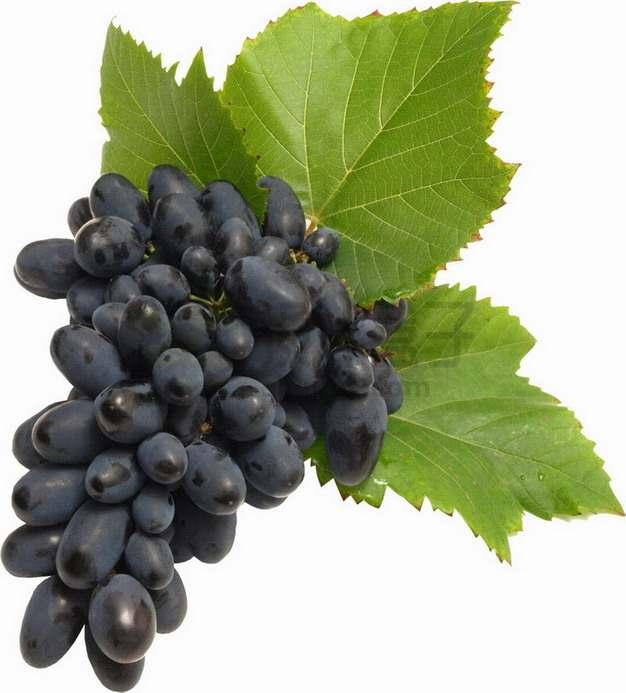 带叶子的黑提葡萄png图片素材